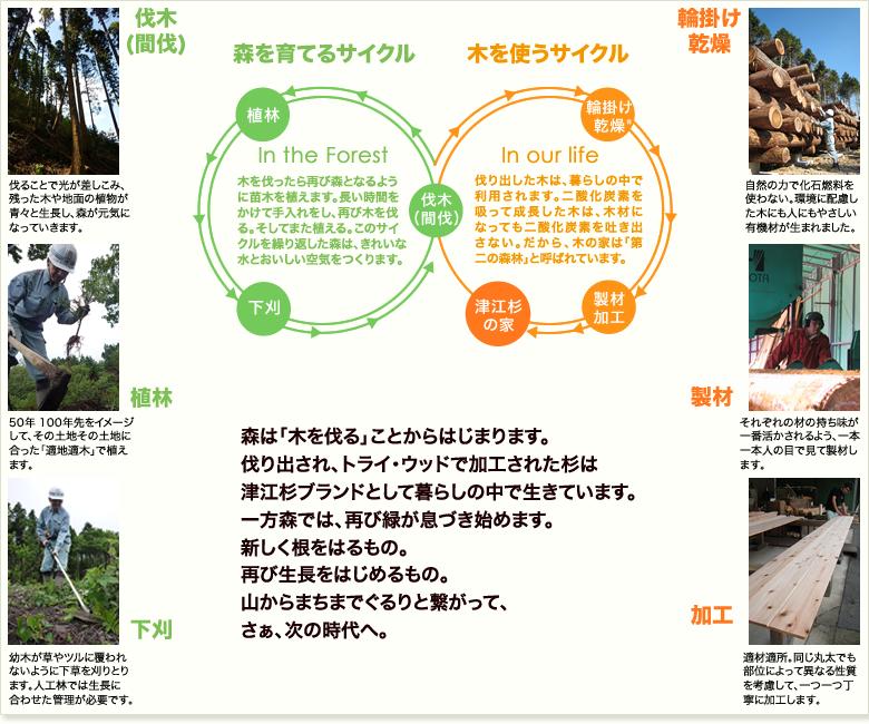 森林サイクル